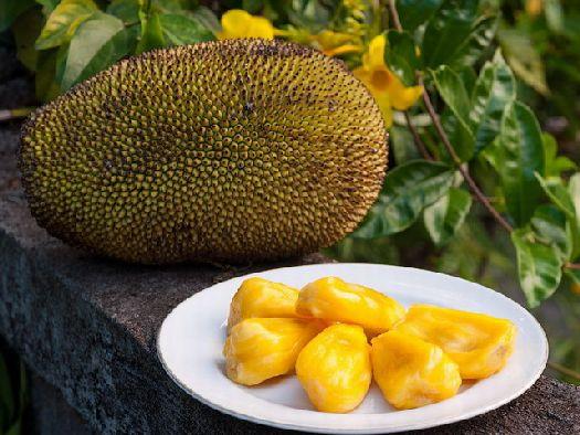 Джекфрукт - рекордсмен по габаритам плодов, съедобная часть находится в самой сердцевине