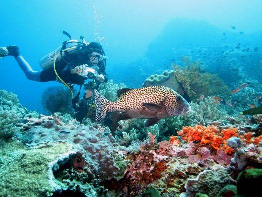Балийское море великолепно в плане дайвинга