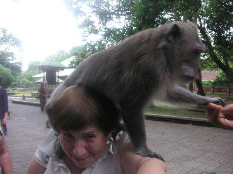 Будьте осторожны с животными на Бали!